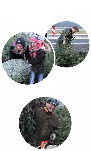 Weihnachtsbaum Selber Schlagen Sauerland.Wirths Weihnachtsbaum Markt